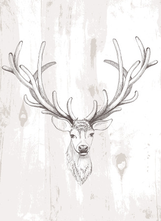 Vector deer. Beautiful Vector illustration on texture of wood. Vector