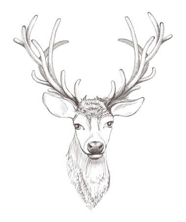 사슴은 격리 된 머리. 아름다운 스케치 그림.