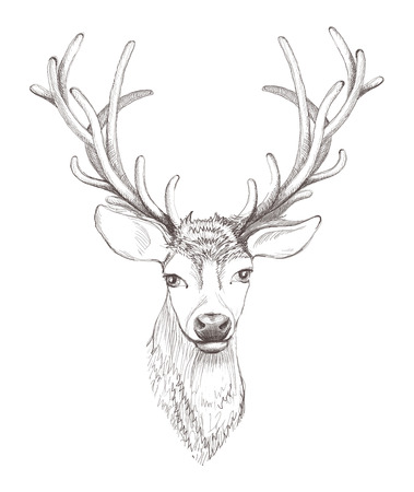 deer head isolated. Beautiful sketch illustration. Çizim