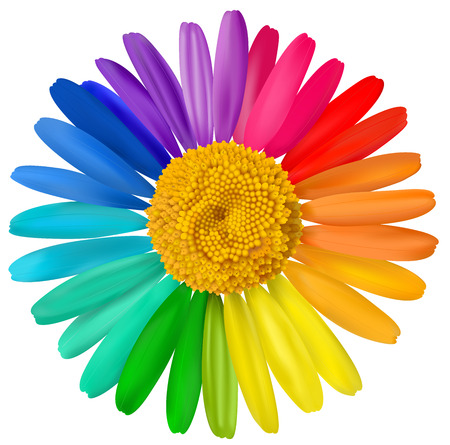 macro flower: Vector multicolored daisy, chamomile flower isolated.  Illustration