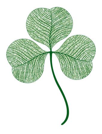 leaf clover isolated.  macro art illustration.