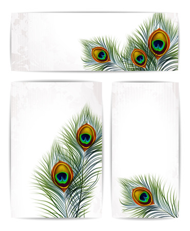 Set of vector peacock feathers with space for text. EPS 10 Illustration