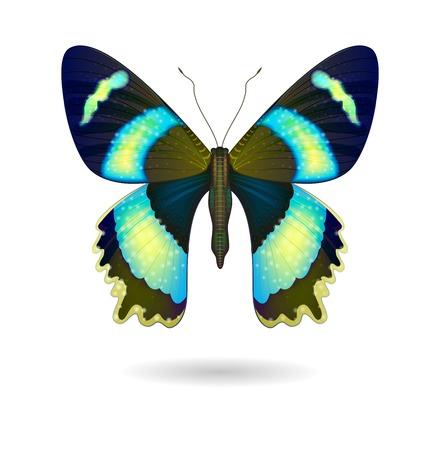 美しい明るい蝶分離ベクトル。
