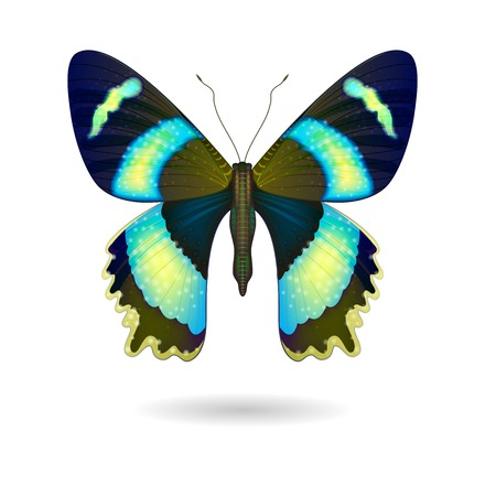 black butterfly: Vector  beautiful bright Butterfly isolated.