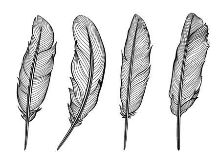 Set van geïsoleerde veren. Vector illustratie in zwart en wit.
