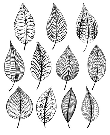 foliage: Set of abstract isolated leaves. Vector illustration in black and white color.