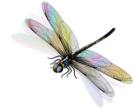 dragonfly wings: Vector dragonfly isolated and colorful.
