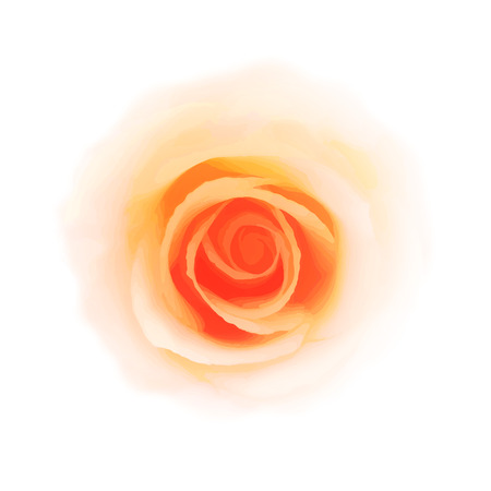 romantic: Romantic rose on white background.