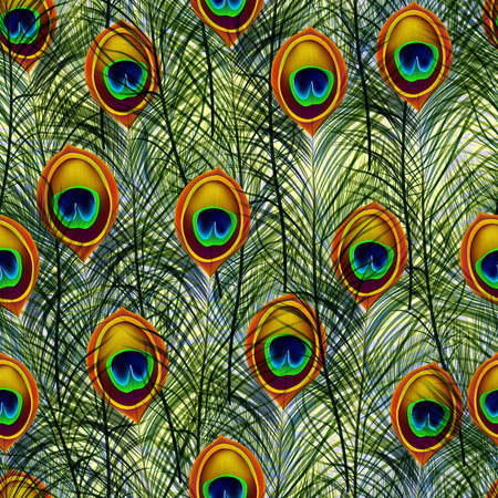peacock feathers: Seamless texture pattern with peacock feathers. Illustration