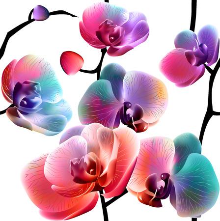orchidee: Seamless pattern con fiori astratti luminosi. Vettore, EPS 10
