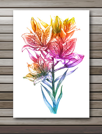 Lily flowers on white background. Colorful vector, EPS 10.