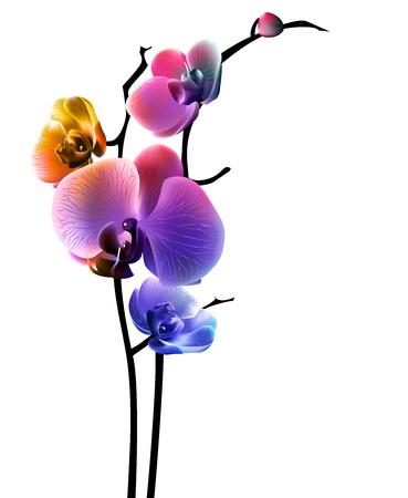 stylised: Orchid isolated flower abstract and colorful. Vector illustration, EPS 10.