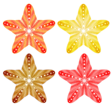 finger fish: Colorful Starfish Set Isolated. Vector Illustration, EPS10. Perfect for any other kind of design.