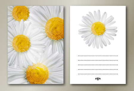 chamomile flower: Vector chamomile flower greeting cards.  Perfect for any other kind of design. Vector illustration, EPS10.