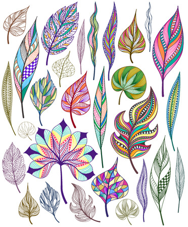 sceleton: Set of colorful abstract leaves. Vector illustration. Illustration