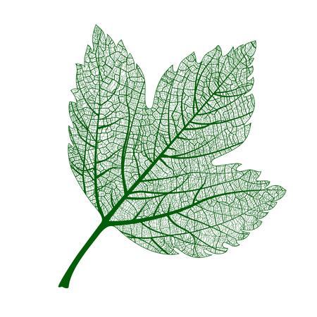 macro: Beautiful elegance natural macro leaf. Vector illustration.