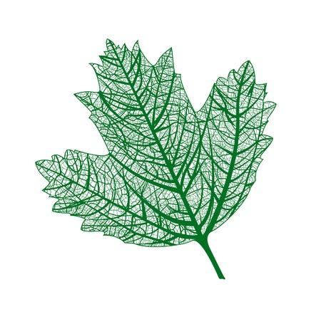 eleganz: Schöne Eleganz natürliche Makroblatt. Vektor-Illustration.