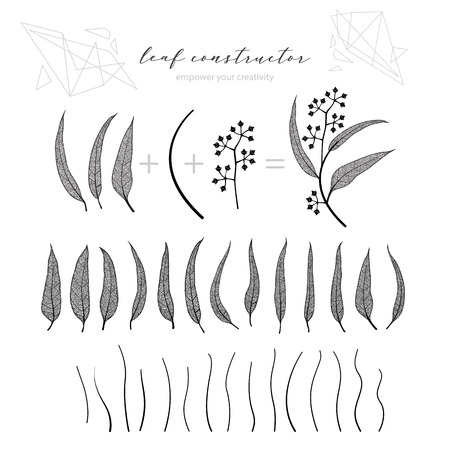 Set of eucalyptus leaf, branch and flowers, fall, spring, summer. Detailed vector vein illustration, not autotrace, constructor design, art Vettoriali