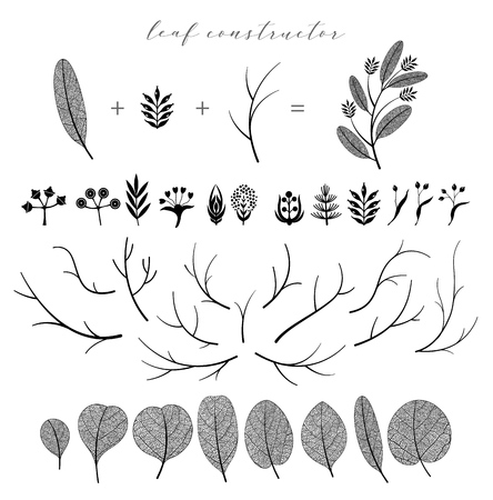 Big set of vector branch and leaf, fall, spring, summer. Detailed macro illustration, not autotrace, constructor