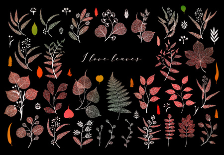 Branches and leaves, fall, spring, summer. Botanical illustration in bright colorful on black background