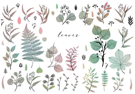 Branches and leaves, fall, spring, summer. Vintage botanical illustration, floral elements in colorful