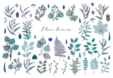 Branches and leaves, fall, spring, summer. Vintage botanical illustration, floral elements in blue color design