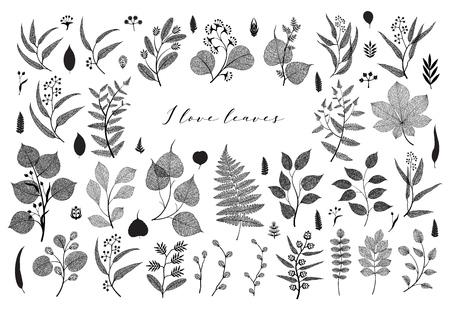 Big set of branches and leaves, fall, spring, summer. Vintage botanical illustration, floral elements in black design on white background