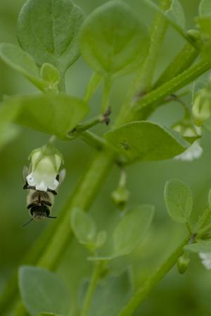 Bee in bloom