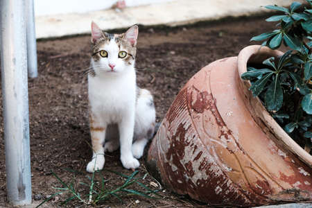 Homeless cat sitting on the ground in a village outside. Serious expression of bewilderment, confusion, reproach on the face. Animal adoption concept. Stray kitten with sad cute eyes, take it home.