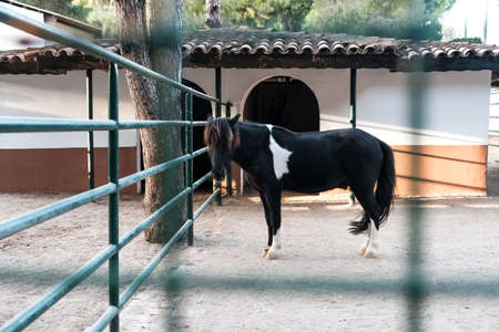 Sad black horse locked in a barn. Looking from behind bars, surrounded by metal grid. Domesticated animal slavery in rural village. Beautiful stallion or mare in a stable ready for riding lesson.