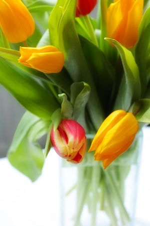 Tulips in the glass vase close up Stock Photo - 4326530