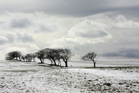 Beautiful winter scene with trees and fields photo