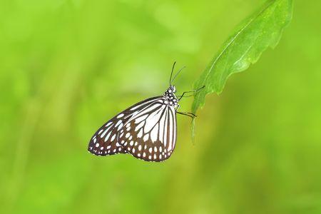 Beautiful exotic butterfly closeup photo