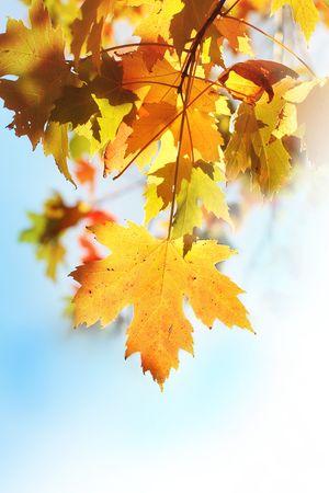 Beautiful autumnal leaves closeup photo