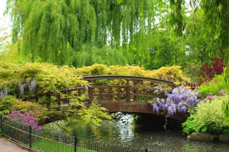 Queen Mary's Garden, London Banco de Imagens - 7076212