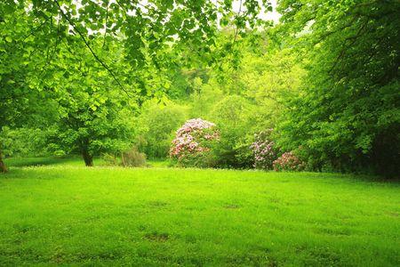 Wonderful, spring garden, Scotland Stock Photo - 7176648