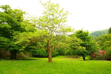 Wonderful, spring garden, Scotland Stock Photo - 7176663