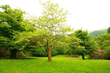 Wonderful, spring garden, Scotland