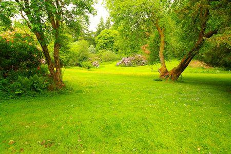Wonderful, spring garden, Scotland photo