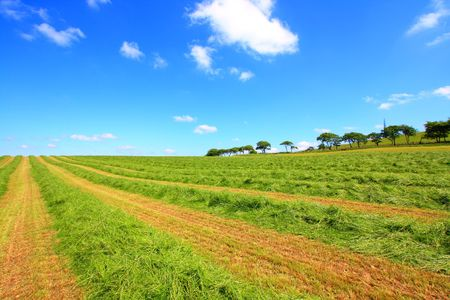 haymaking: Beautiful lansdscape with Haymaking in Sotland