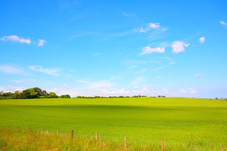 Beautiful landscape with growing wheat in Scotland photo