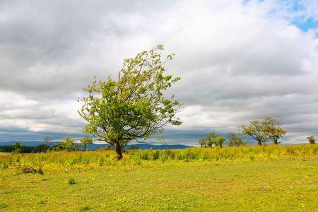 Lonely tree agains white clouds in Scotland photo