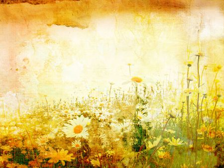 Beautiful grunge background with meadow of daisies photo