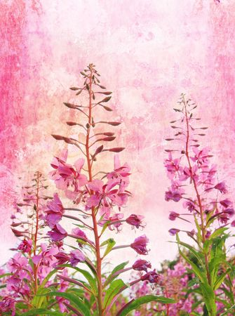 Grunge background with wildflowers Stock Photo - 7412821