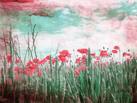 Beautiful grungy background with poppies Stock Photo - 7433145