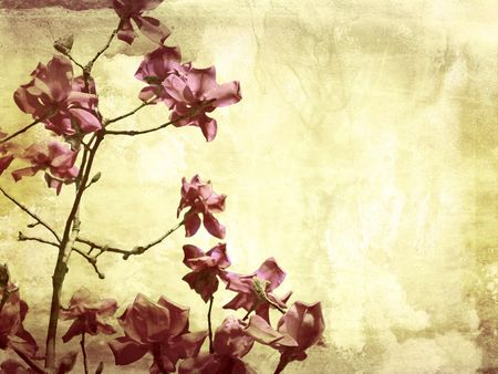 Beautiful grunge background with magnolia flowers Stock Photo - 7433144