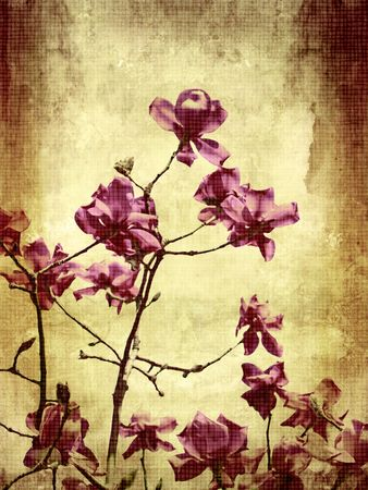 Beautiful grunge background with magnolia flowers Stock Photo - 7433140