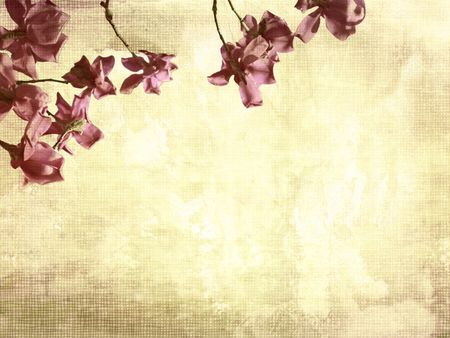Beautiful grunge background with magnolia flowers Stock Photo - 7433139