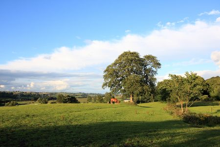 Summer landscape with a horse, Scotland photo