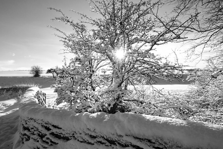 Winter in Scotland, black and white  photo
